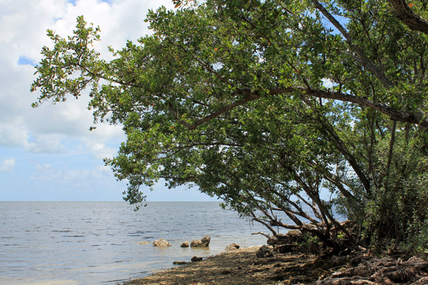 Biscayne National Park.