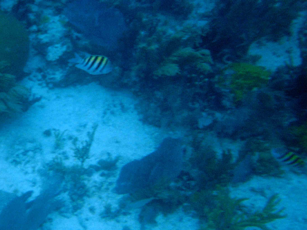 Snorkeling in Biscayne National Park.